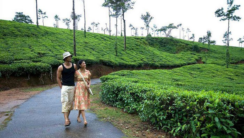 Honeymoon Package Ooty - 2 Nights / 3 Days